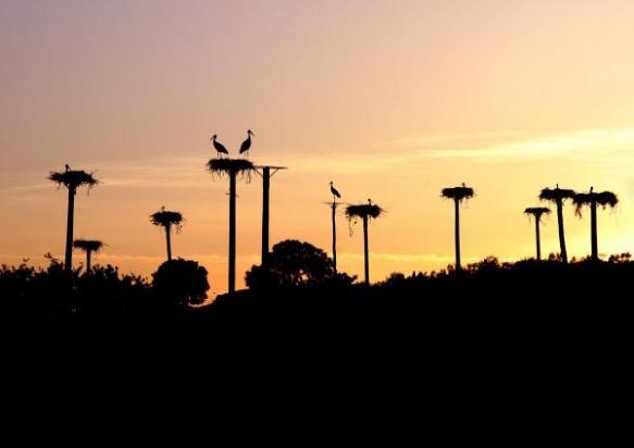 Cigüeñas en el Monumento Natural Los Barruecos (Extremadura, España)