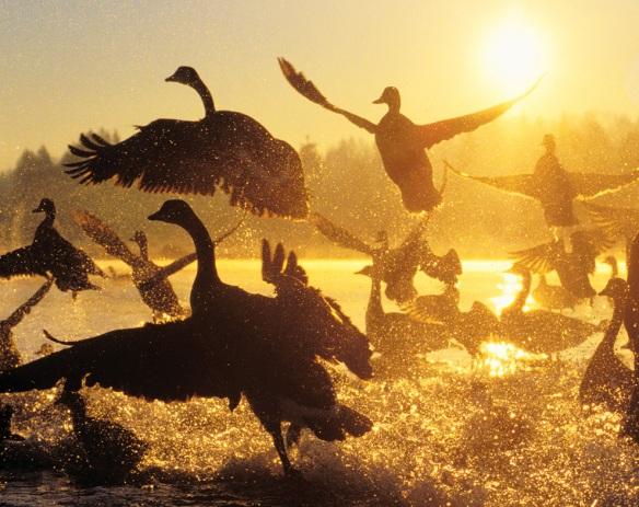 grandes-migraciones
