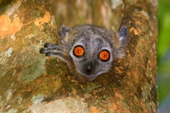 sportive-lemur