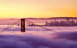 Niebla SF